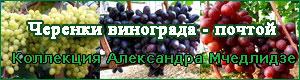 Заказать черенки и саженцы винограда
