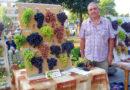 Выставка винограда 2015 в Пинске